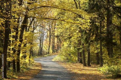 Tuinposter Weg in bos Road through the autumn forest on a sunny morning