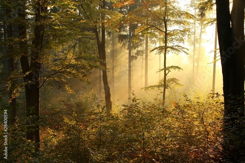 Papiers peints Foret brouillard Picturesque autumnal forest backlit by the rising sun