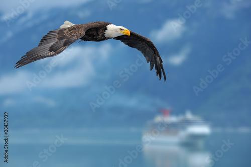 In de dag Eagle american bald eagle superimposed over alaska inside passage scen