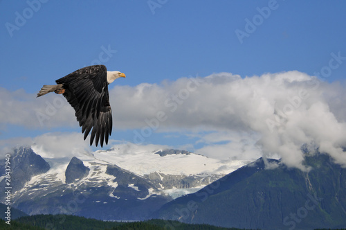 In de dag Eagle american bald eagle superimposed over alaska coastal mountain sc