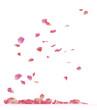 canvas print picture - rose petals