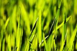 Gras Grün Detail Makro