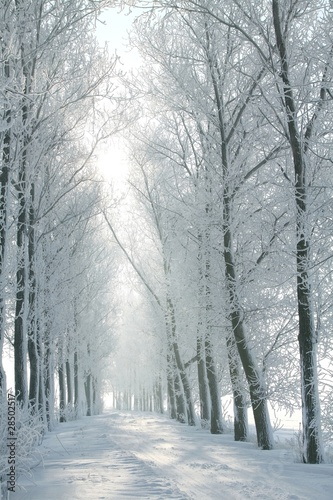 Staande foto Bleke violet Winter rural road between the trees covered with frost