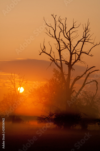 Misty morning with trees in silhouette