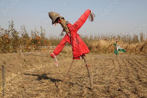 Foto auf AluDibond Drachen scarecrow