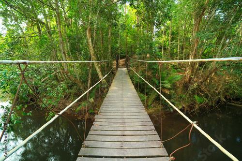 Bridge to the jungle,Khao Yai national park,Thailand
