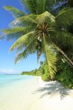 Fototapeta Fototapety z morzem do Twojej sypialni - palma