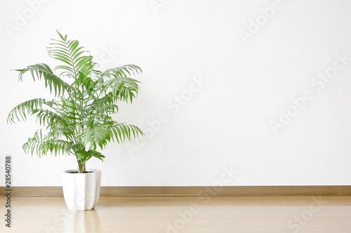 Foto  Weiße Wände und Böden und Zierpflanzen