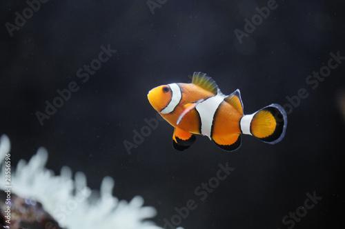 Nemo Fototapeta