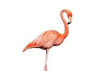 Pink Flamingo.