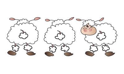 Sheep group.