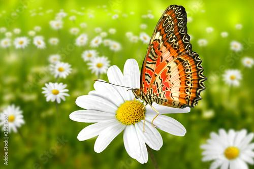 Naklejki zwierzęta butterfly-101