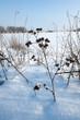 wintertime landscape snow