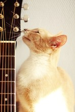 Kot I Gitara