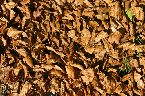 Tapis Feuille Buy This Stock Photo And Explore Similar Images At