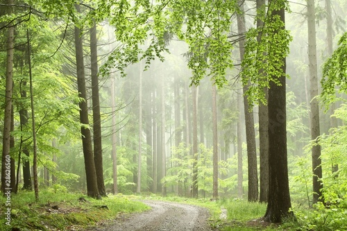 Papiers peints Foret brouillard Mountain trail in misty spring forest during rainfall