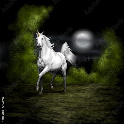 Foto-Stoff - unicorno notturno (von Piumadaquila)