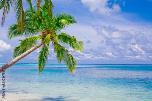 Fotografie, Obraz  Holiday Paradise