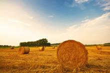 Meadow Of Hay Bales