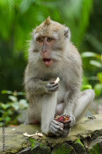 Tuinposter Eekhoorn Monkey (Macaca fascicularis)