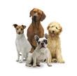 4 Hunde