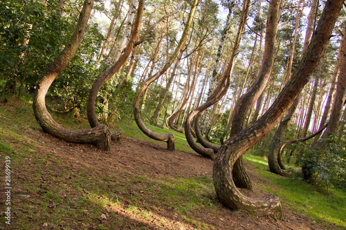 Curved forest reserve in Poland Canvas-taulu