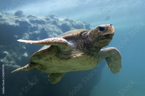 Poster Tortue Tortue marine