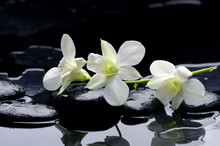 Beauty Row Of Orchid And Stone...