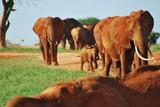 elephant's 05