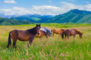 Panel Szklany Łąka Horses are grazed on a meadow