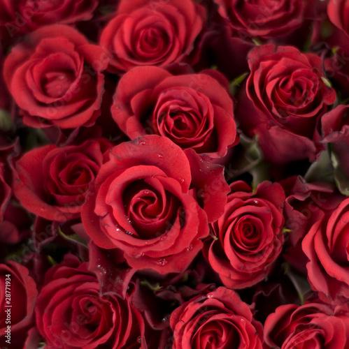 Rote Rosen #28771934