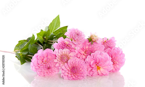 In de dag Dahlia a bouquet of pink Dahlia flowers isolated over white