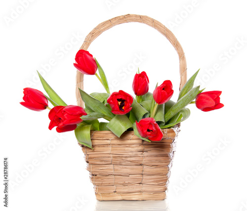 Photo  cheerful red bouquet  tulips in a wicker basket isolated over wh