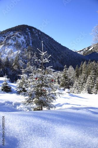 Photo  Weihnachtsbaum im Schnee