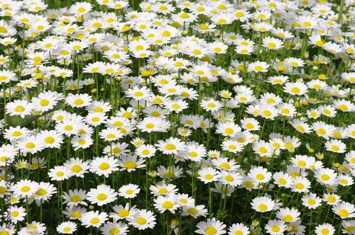 Fotografie, Obraz  spring flower