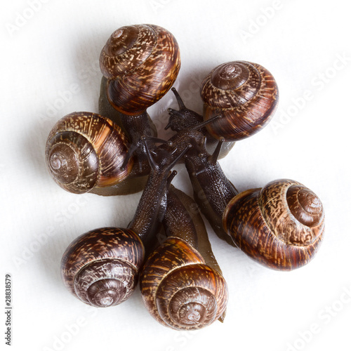 Photo group of snails on white background