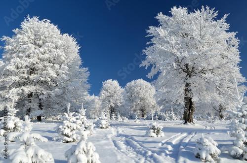 Fototapeta zima gorski-szlak-miedzy-osniezonymi-drzewami
