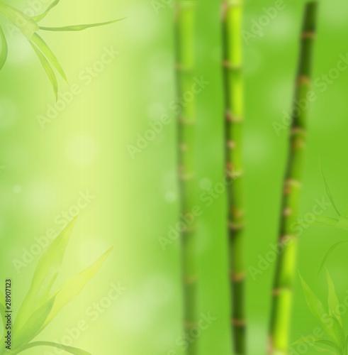 rozmycie-tla-bambusa