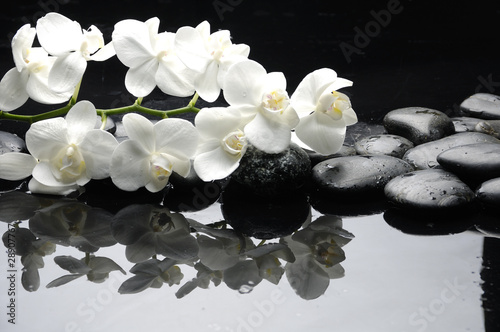 Close up white orchid with stone water drops