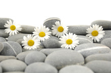 Still Life With White Flower And Gray Pebbles