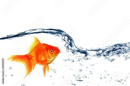 goldfish Fototapet