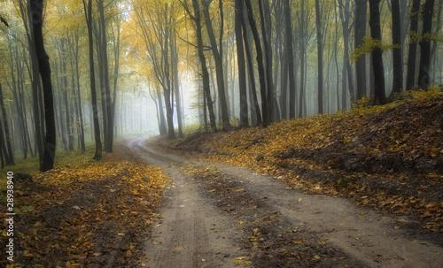 droga-przez-mglisty-las-z-pieknymi-kolorami-jesienia