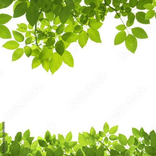Montage in der Fensternische Frühling Green Leaves Border on white background