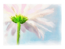 Digtial Watercolor Of Pink Daisy