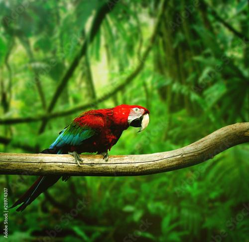 Papuga w dżungli