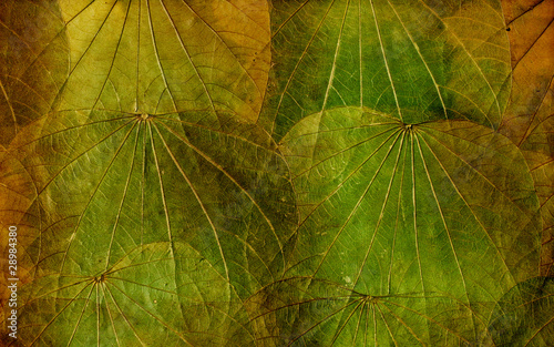 Grunge background of colorful dried leaves Canvas Print