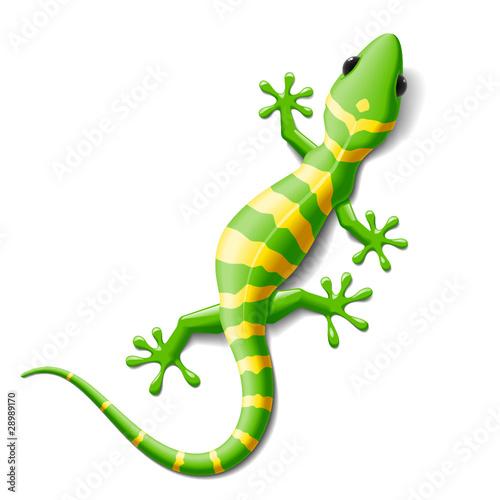 zielony-gekon