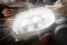 Image Of Three Pearls In The Shell On Wet Pebbles.