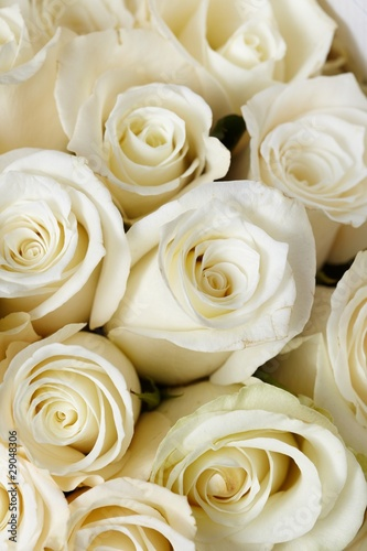 Fotobehang Roses Cream roses