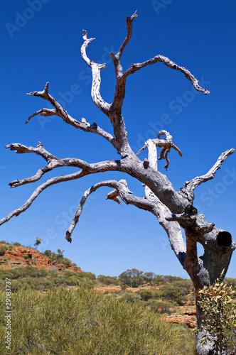 Fotografie, Obraz Toter alter Baum